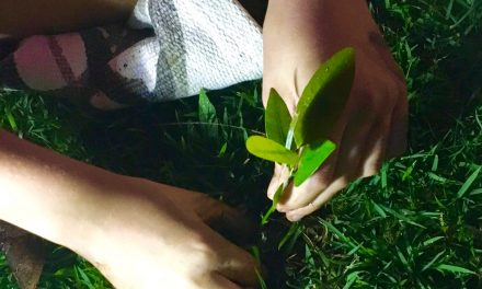 """Teresa Suárez: """"Hurricane María Also Planted Trees"""""""