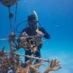 Embajadores del mar: Una juventud comprometida con el cambio